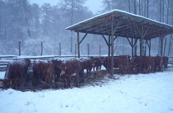 Ránkszakadt a hóhelyzet